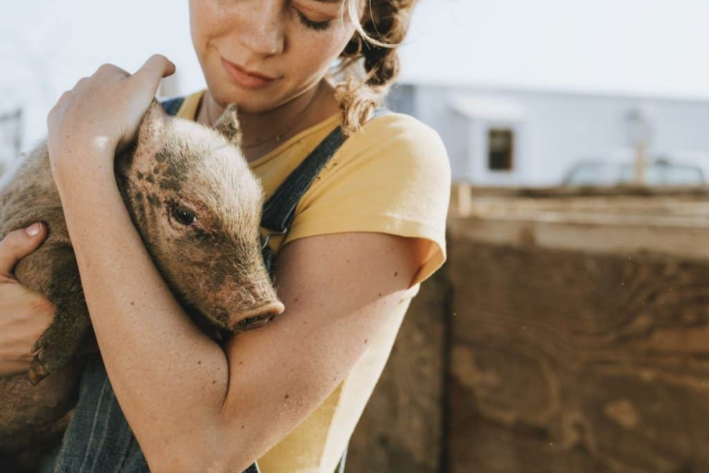 volunteer service caring for a piglet