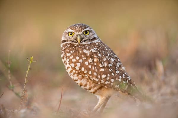owl curious about intelligence