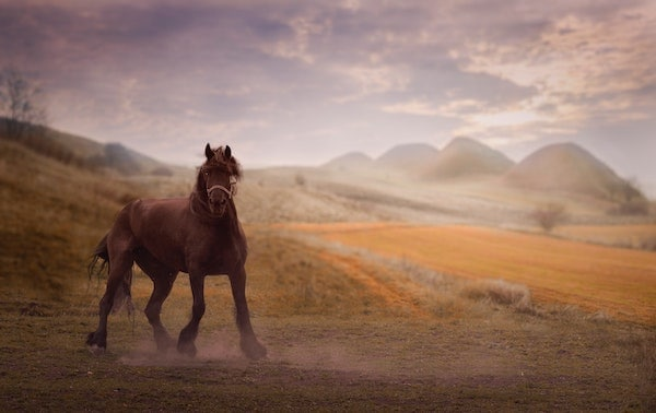 The yearn of the wild horse