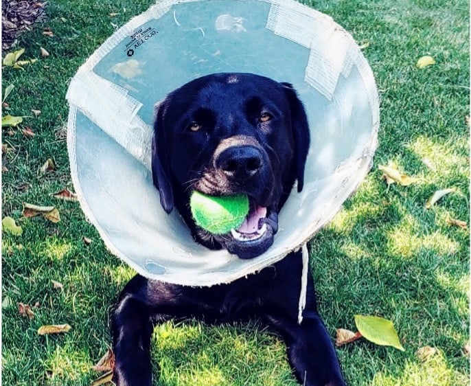 Cone of shame requires extensive emergency fund